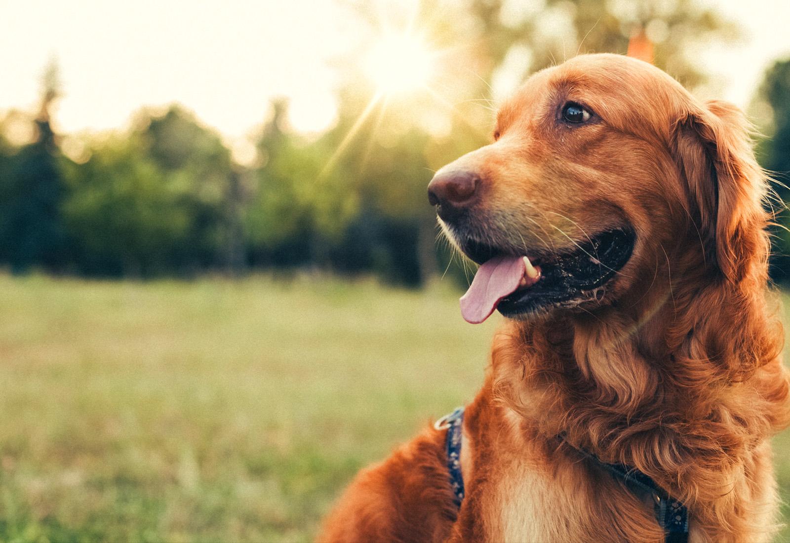 Výsledok vyhľadávania obrázkov pre dopyt dog