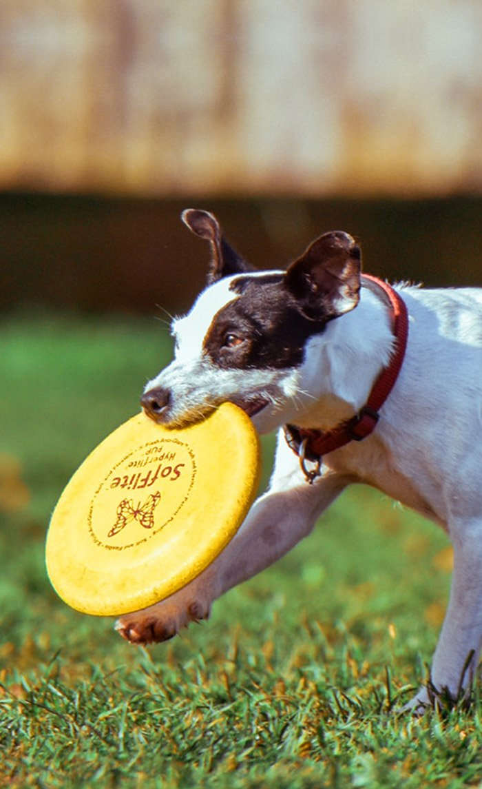 The Association of Professional Dog Trainers | APDT